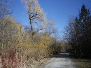 cedarvale-early-spring-2016-001