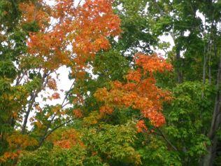 cedarvale-fall-colours-062