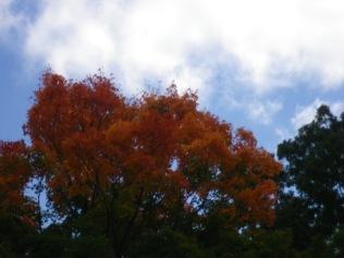 cedarvale-fall-colours-087