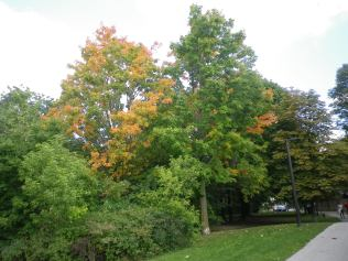 cedarvale-lakeshore-and-i-074