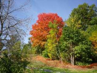 cedarvale-leaves-2015-016