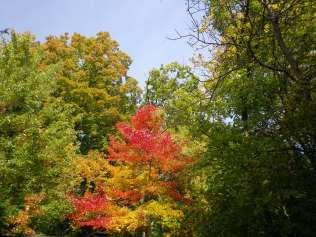 cedarvale-leaves-2015-020