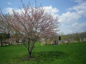 cedarvale cleanup day 023
