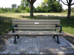 Cedarvale benches, tree 006