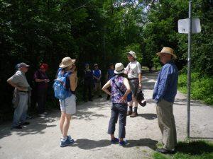 Cedarvale John Routh walk 097