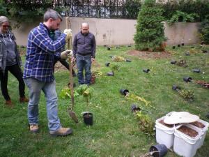 Cedarvale planting Oct. 2015 009