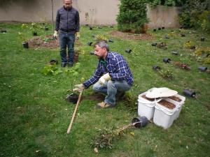 Cedarvale planting Oct. 2015 010