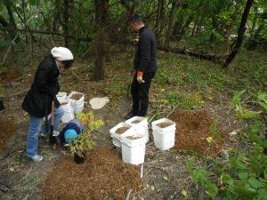 Cedarvale planting Oct. 2015 017