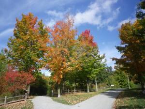 Cedarvale leaves 2015 005
