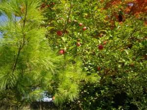 Cedarvale leaves 2015 017