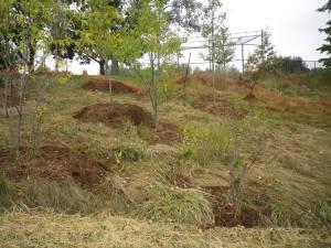 Cedarvale planting Oct. 2015 020