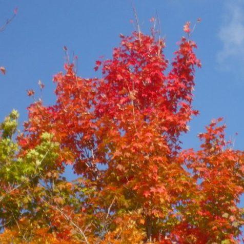 cropped-cedarvale-leaves-2015-006.jpg