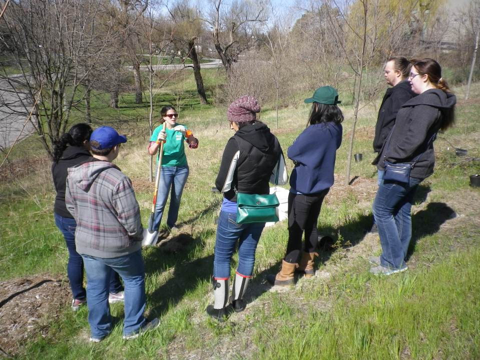 Cedarvale Tree planting May 2016 006