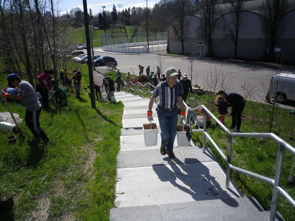 Cedarvale Tree planting May 2016 013
