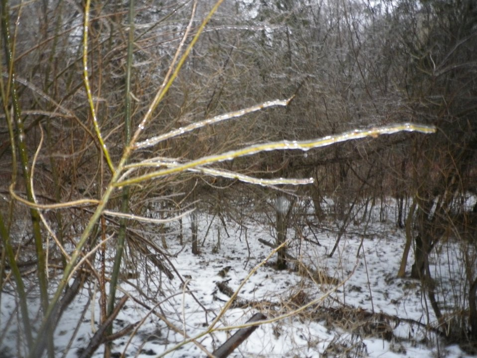Cedarvale mini-ice storm 007.JPG
