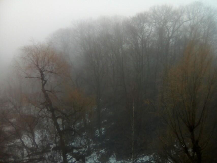 cedarvale-austin-siberian-elms-precursor-to-spring