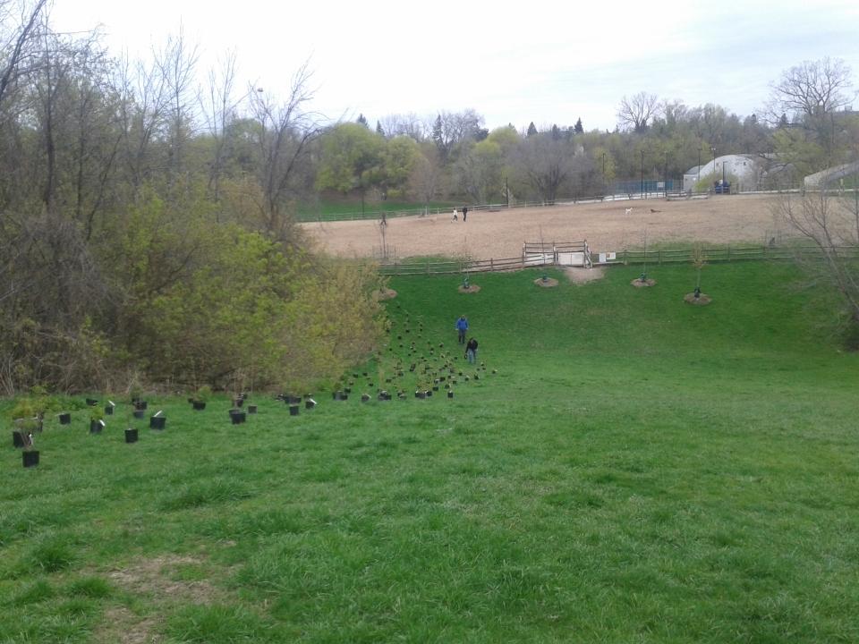 Cedarvale planting April 2017 20170429_094405[1]
