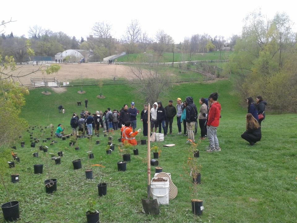 Cedarvale planting April 2017 20170429_101145[1]