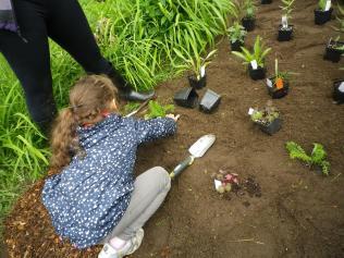 Planting off Arlington