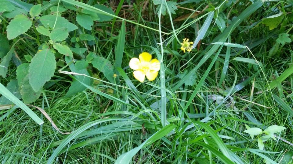 Cedarvale flower walk July 6