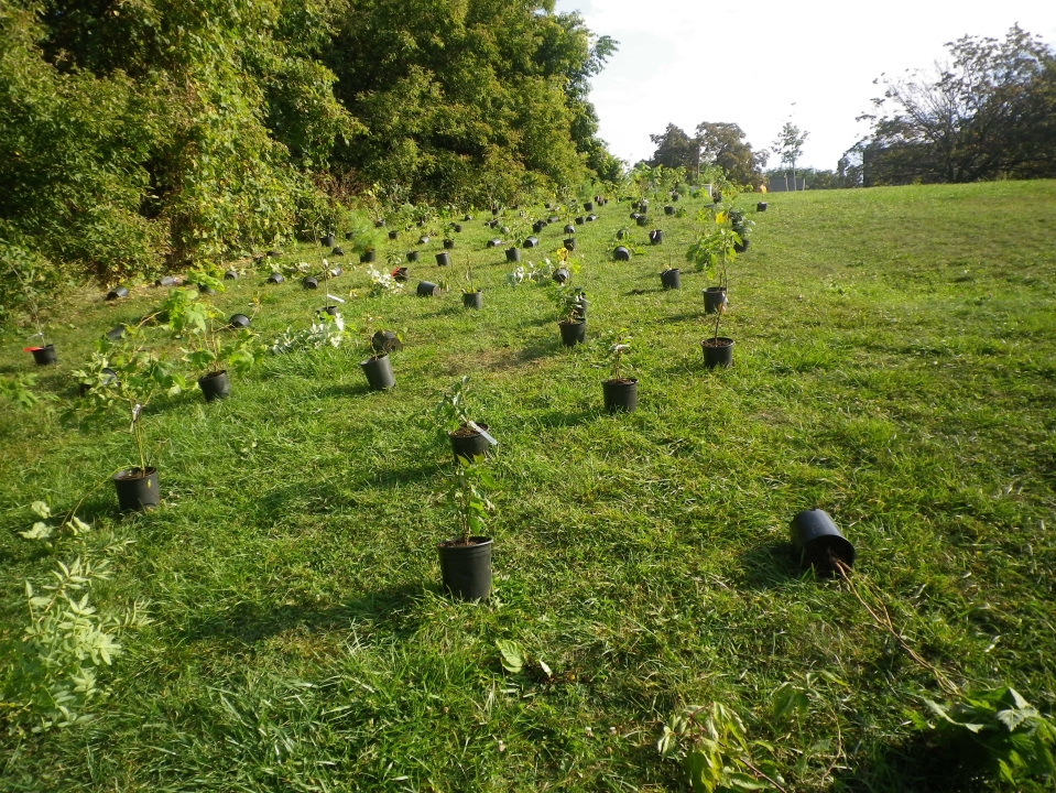 Cedarvale planting Sept. 17 003