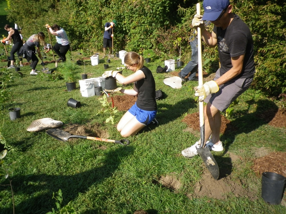 Cedarvale planting Sept. 17 019