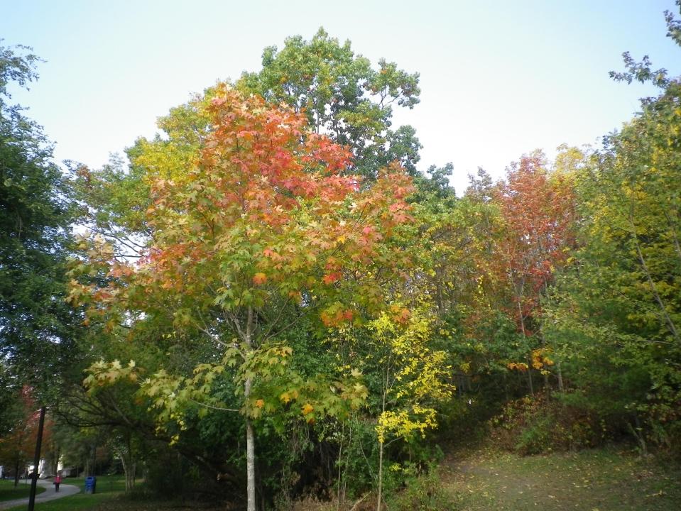 Cedarvale autumn 2017 086